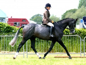 O.Cheshire co trot029