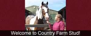 Welcome to Country Farm Stud