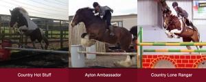 Stallions Slide 1